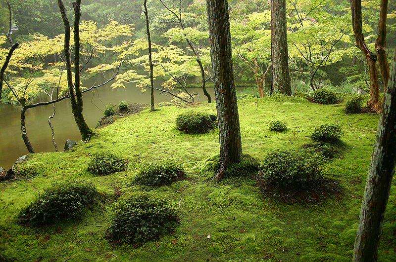 Сад храма Сайхо-дзи в Киото, фото Ivanoff / Wikipedia