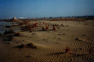 Сумерки в пустыне