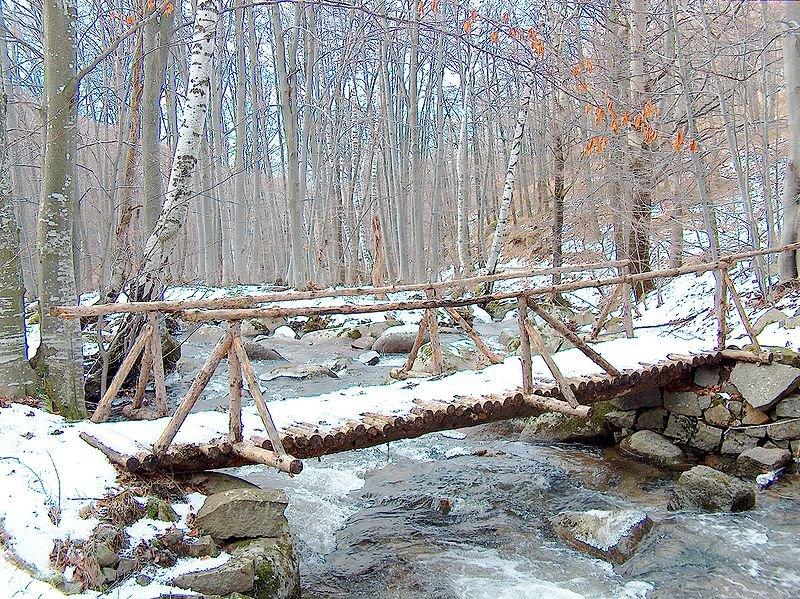 Лес в парке Витоша