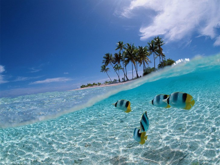 Подводный мир Бунакена, фото http://stresseffect.wordpress.com