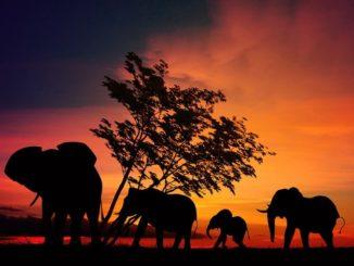 Африка, слоны