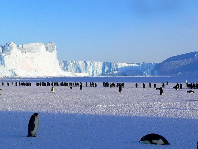 Пингвины - обитатели Антарктиды