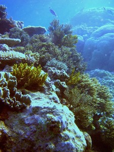 Большой барьерный риф, под водой