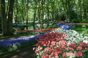 Парк Кёкенхоф, Голландия