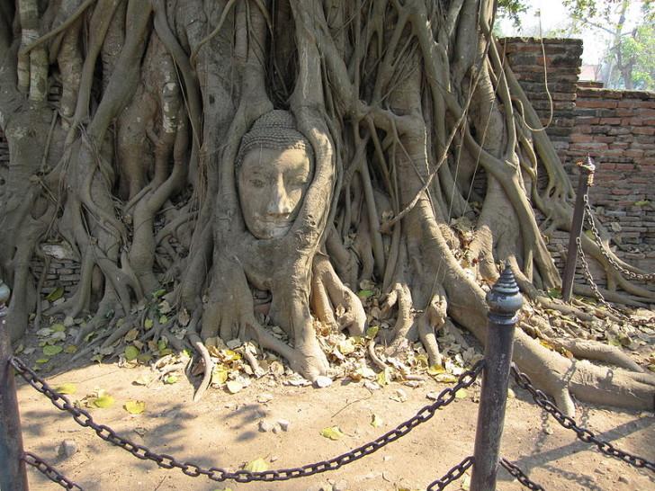 Голова Будды, Аюттхая
