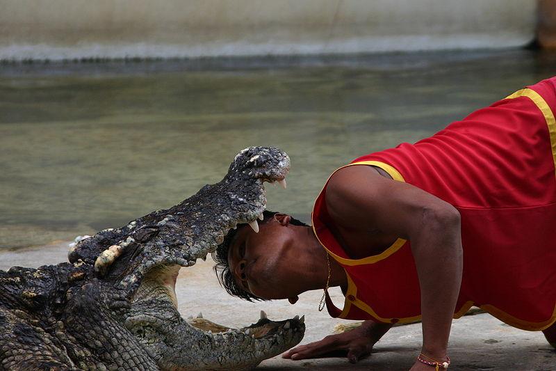 Крокодиловая ферма, фото Evilarry