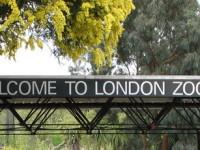 Лондонский зоопарк, фото britishsouvenirs.ru