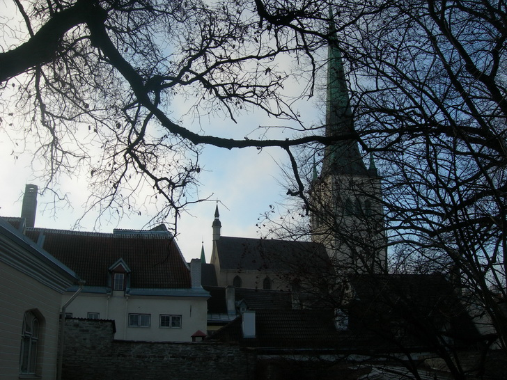 Таллин, крыши и Олевисте