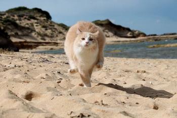 Кошка на Сардинии