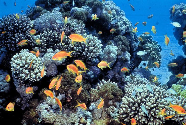 Рифы в Эйлате