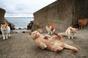 Остров Тасиро, Япония