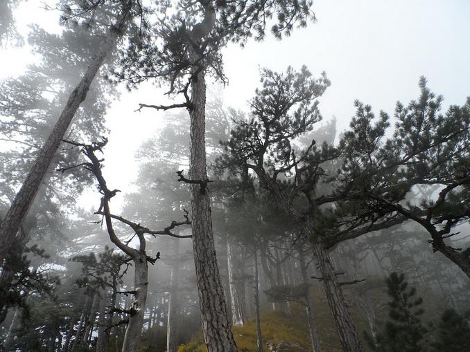 Лес на Кореизской тропе