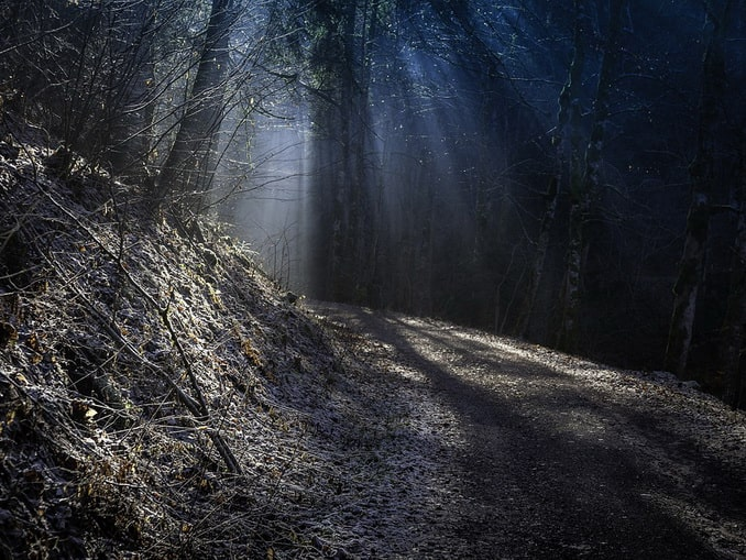 Еловый лес в Шварцвальде