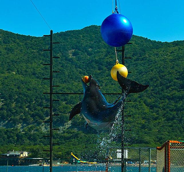 Дельфин в Утришском дельфинарии, фото Darkenrau / фото Wikimedia Commons