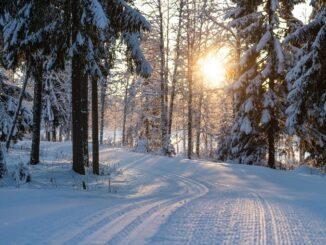 Зимний лес в Подмосковье - где можно отдохнуть на Новый год