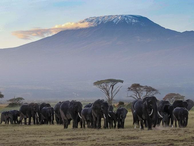 Слонам не нужно восхождение на Килиманджаро