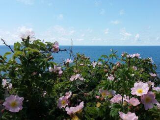Анапа в июне: море и цветы?фото Ольга Анапа / Wikimedia Commons