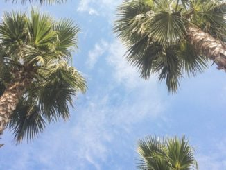 Сочи: пальмы и небо