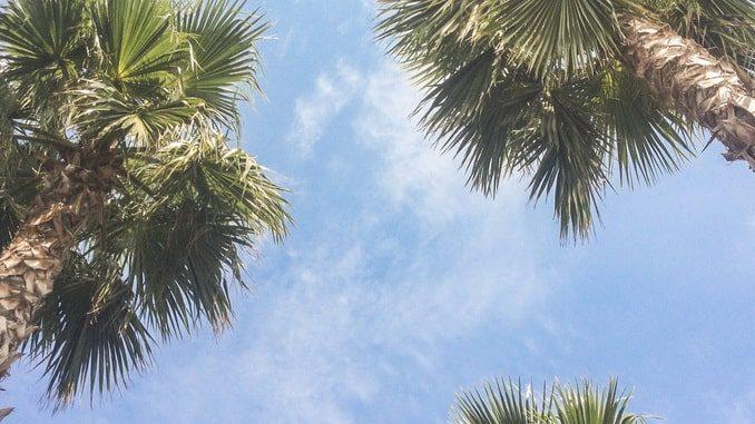 Сочи в начале мая: пальмы и небо