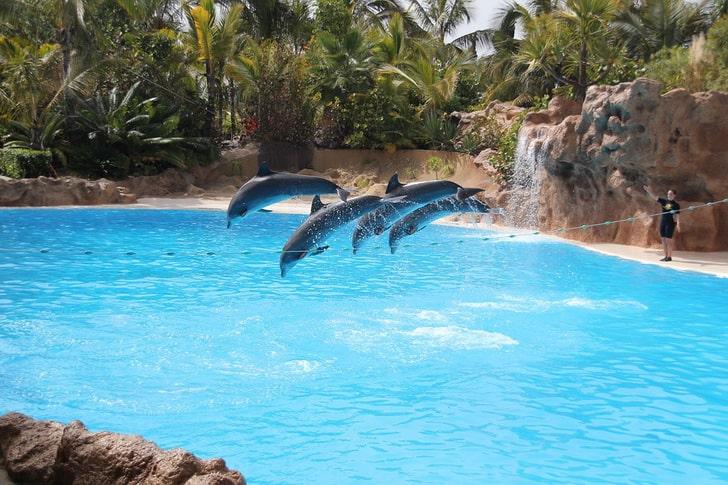 Дельфинарий на Тенерифе