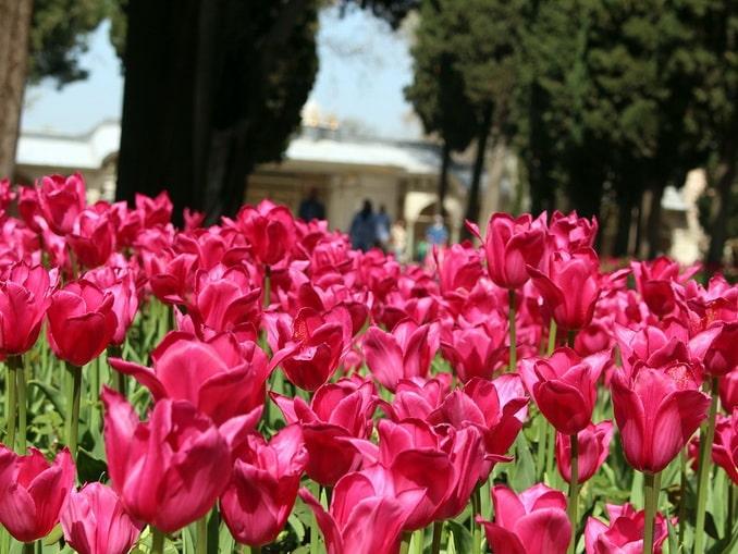 Топкапы, Стамбул, тюльпаны