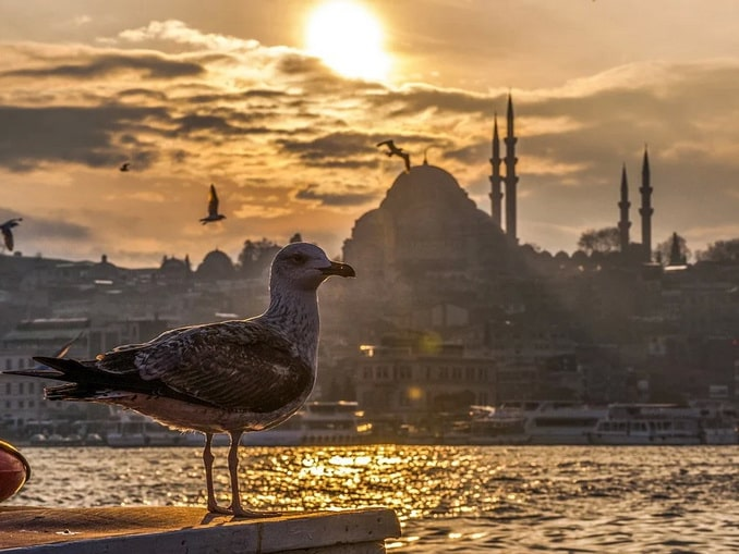 Зимний Стамбул, чайка