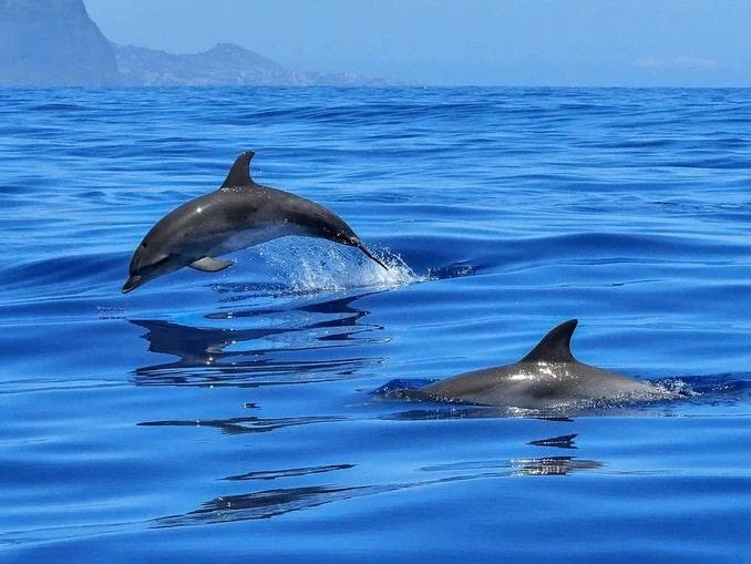 Дельфины - куда съездить на Черное море в России?