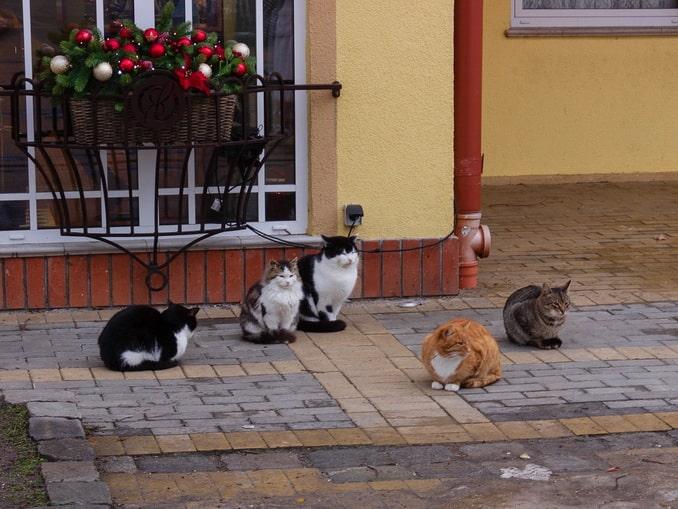 На кошек обязательно нужно посмотреть в Зеленоградске