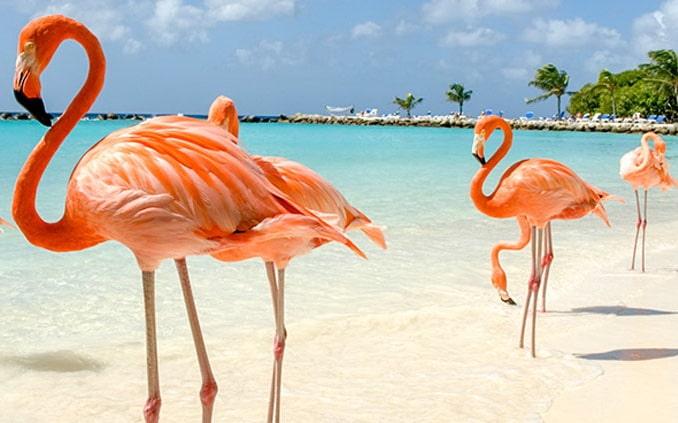 На Кайо Коко пляжи лучше, чем на Варадеро?